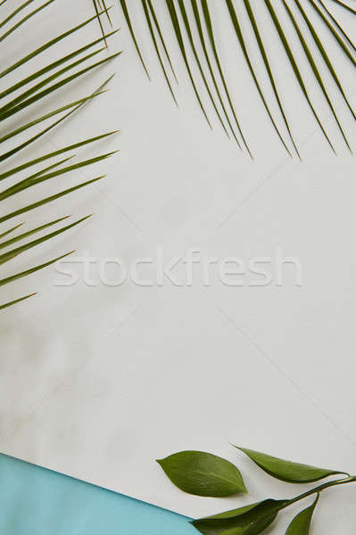 Stock photo: Palm green leaves covering blank copy space