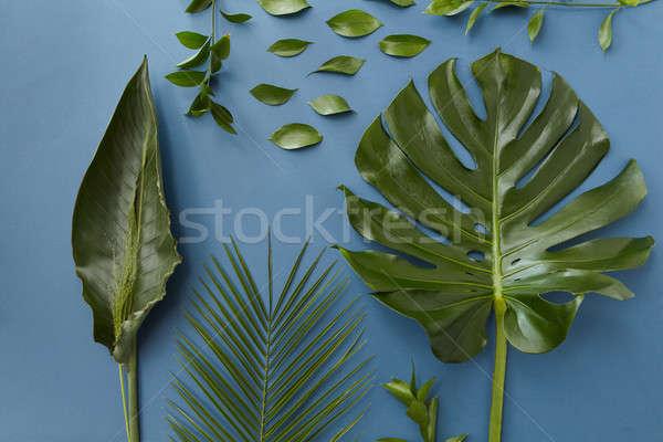 Green leaves isolated Stock photo © artjazz
