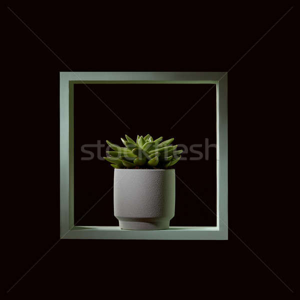 Wooden green frame with echeveria in a flowerpot on a black background Stock photo © artjazz