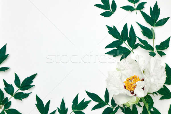Branch with leaves and flower wite peony as frame on white Stock photo © artjazz