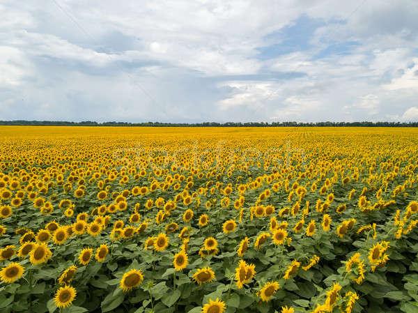 природного лет пейзаж области желтый Сток-фото © artjazz