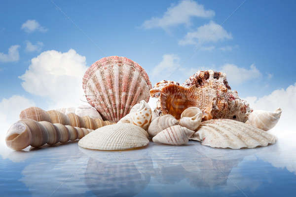 sea shells in water against blue sky Stock photo © artjazz