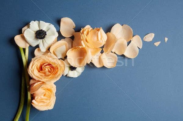 Quadro flores canto belo laranja rosa Foto stock © artjazz