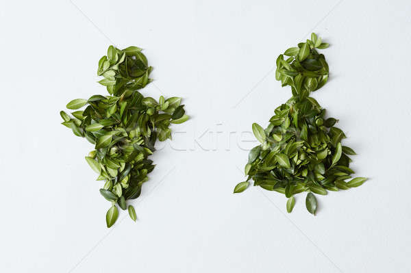 Male and female concept made of leaves Stock photo © artjazz