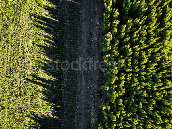 Aerial view forest and field sunny day. Photo from the drone Stock photo © artjazz