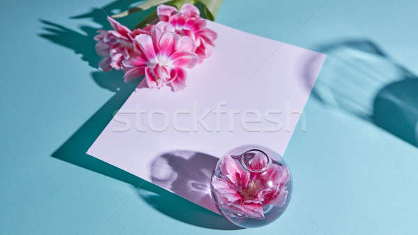 Postcard with tulips and shadows on a blue background. Mothers Day Stock photo © artjazz