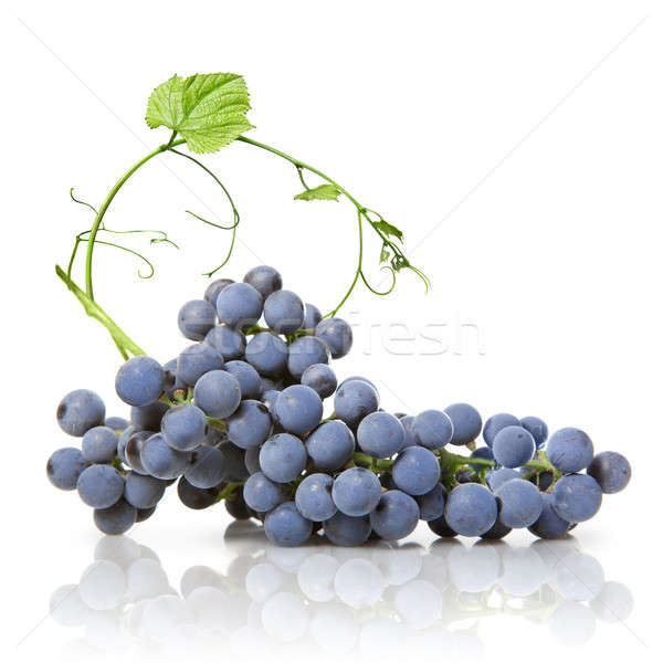 blue grape with green leaf isolated on white Stock photo © artjazz