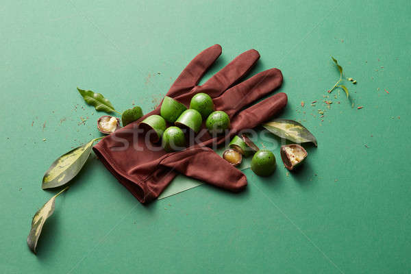 green chocolate candy with jelly Stock photo © artjazz