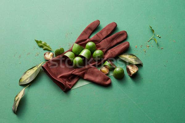Zöld csokoládé cukorka zselé kesztyű levelek Stock fotó © artjazz