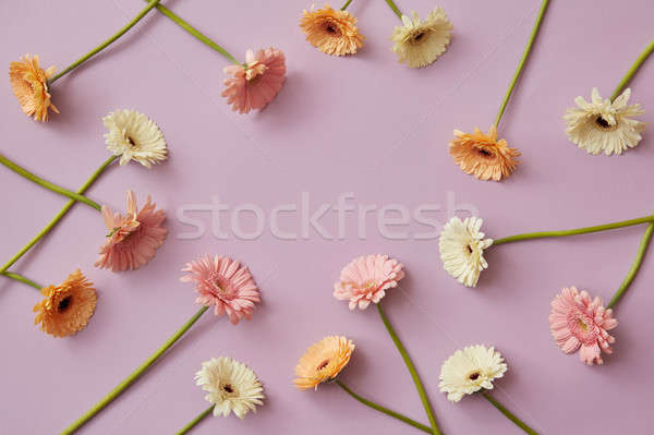 Creative pattern of various colorful gerberas on a pink paper background Stock photo © artjazz