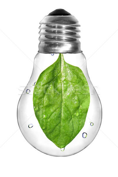 Natural energy concept. Light bulb with green spinach leaf inside isolated on white Stock photo © artjazz