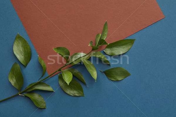 Green twig covering copy space Stock photo © artjazz