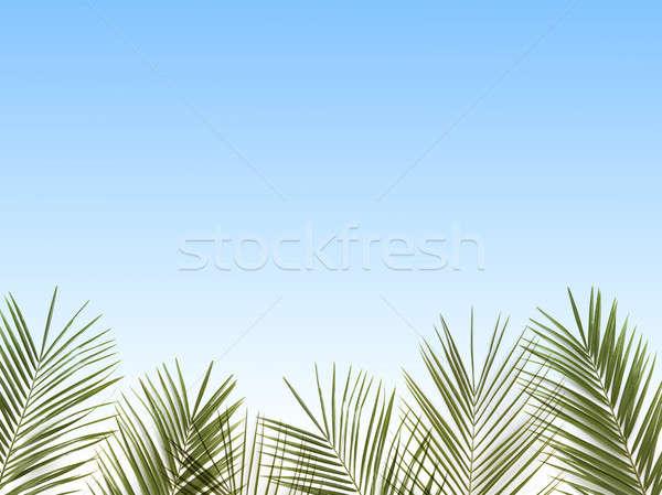 Feuilles de palmier bleu ciel espace de copie lumière fond Photo stock © artjazz