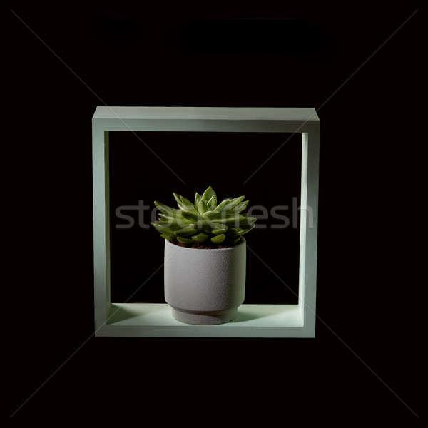 Flower of echeveria or stone rose in a flowerpot in a wooden green frame on a dark background Stock photo © artjazz