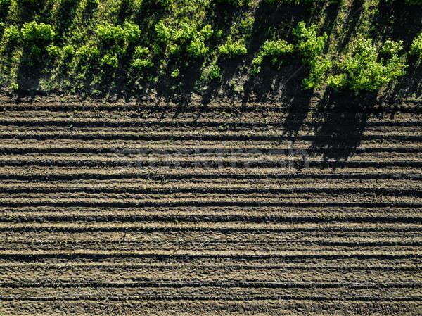 Aerial view cultivated rural field, agriculture Stock photo © artjazz