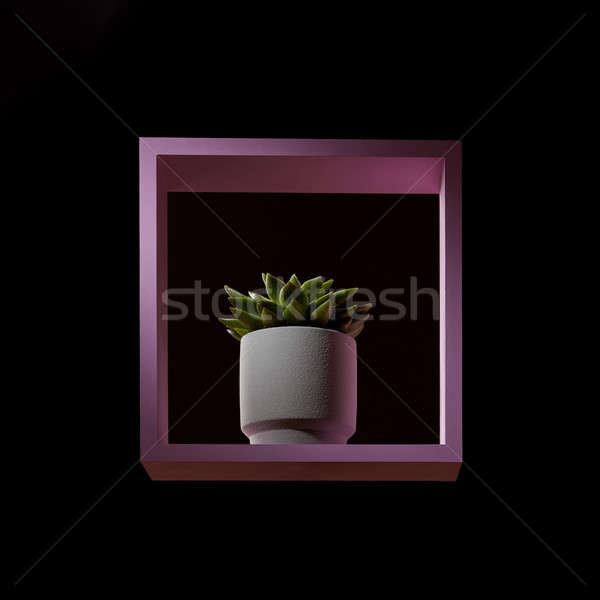 Soczysty kwiat doniczka różowy ramki ciemne Zdjęcia stock © artjazz
