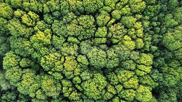 Aerial top view of green trees forest as natur background Stock photo © artjazz