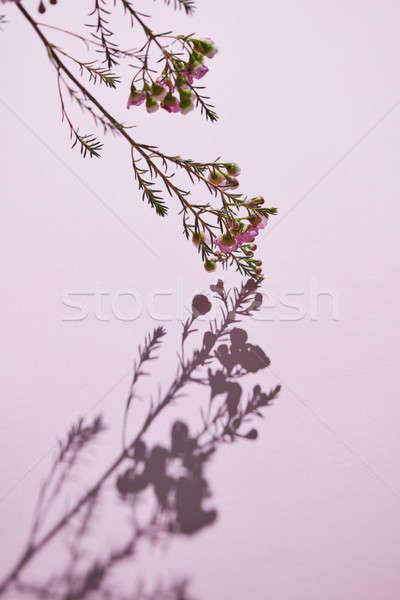 Stock fotó: Tavasz · virágzó · ág · rózsaszín · virágok · virágzó
