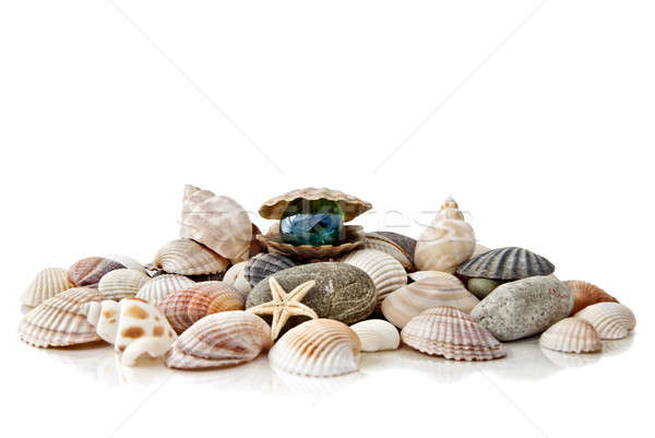 various color shells with stylized pearl isolated on white Stock photo © artjazz