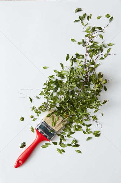 Brosse feuilles vertes blanche vert fleur printemps Photo stock © artjazz