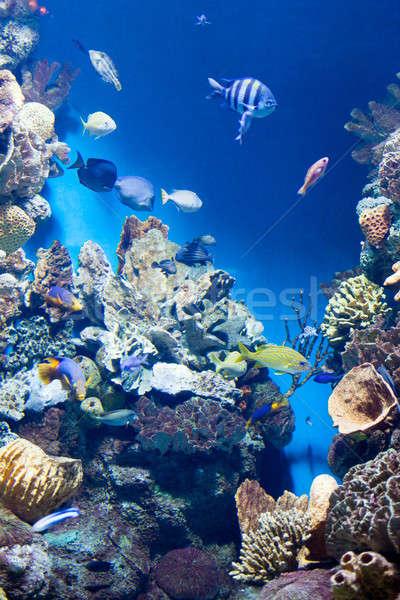 Muitos peixe sol mar Foto stock © artjazz