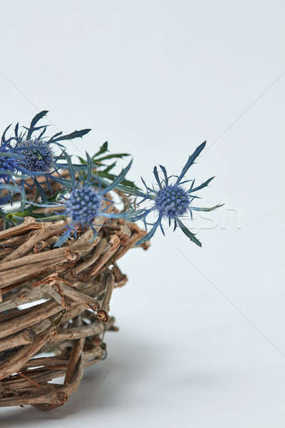 Blue flowers of the eryngium in a basket of twigs Stock photo © artjazz
