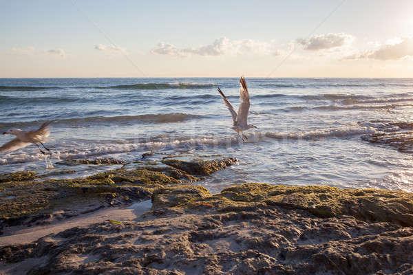 Seagulls on coastline of Mallorca Stock photo © artjazz