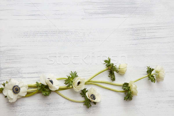 Weaving white flowers Stock photo © artjazz