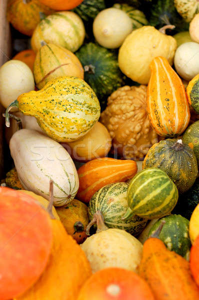background from small different pumpkins Stock photo © artjazz