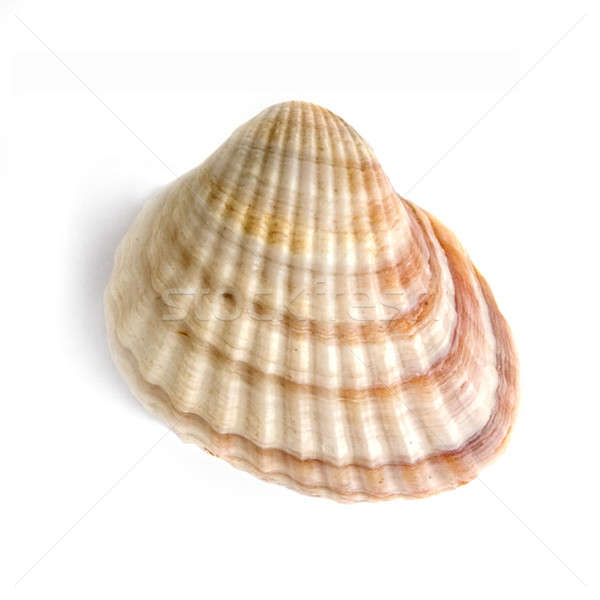 macro of shell isolated on white Stock photo © artjazz