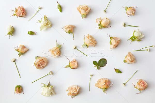Stok fotoğraf: Güller · yumuşak · yaprakları · beyaz · görmek