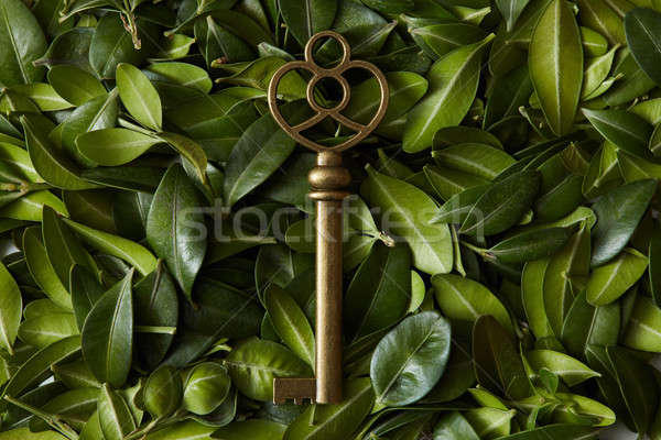 Green leaves with vintage key Stock photo © artjazz