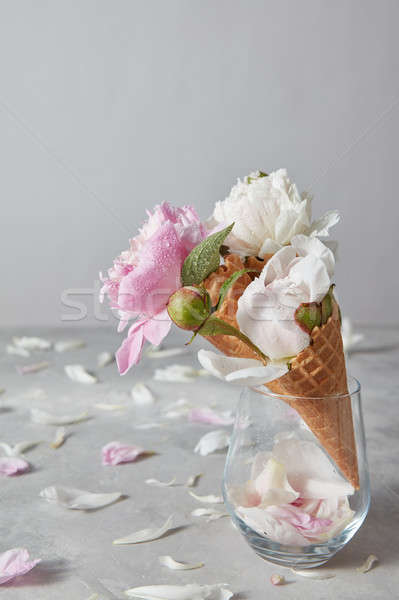 Decorative card with beautiful flowers peony with water droplets Stock photo © artjazz