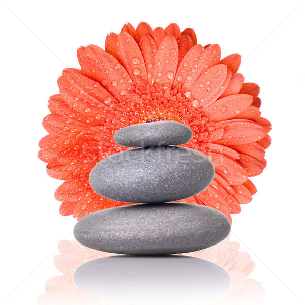 Spa stones with red gerbera isolated on white Stock photo © artjazz