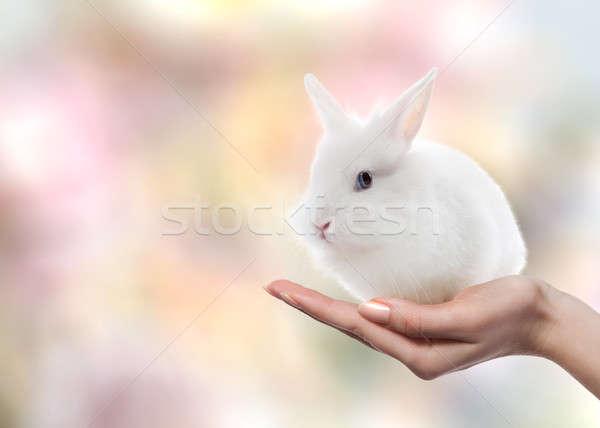 Easter rabbit on woman's hand Stock photo © artjazz