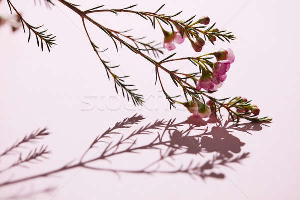 Fleur branche printemps coloré rose fleurs Photo stock © artjazz