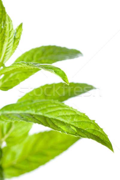 макроса фото зеленый мята изолированный белый Сток-фото © artjazz
