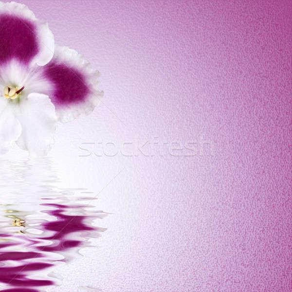 Flor-de-rosa pintura margarida cor cabeça planta Foto stock © artjazz