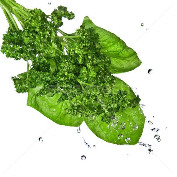 Сток-фото: капли · воды · зеленый · шпинат · петрушка · изолированный