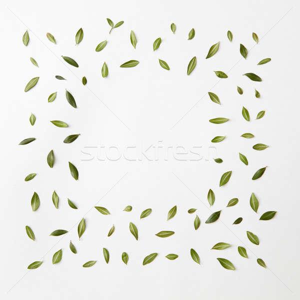 Feuilles vertes cadre blanche espace texte texture Photo stock © artjazz