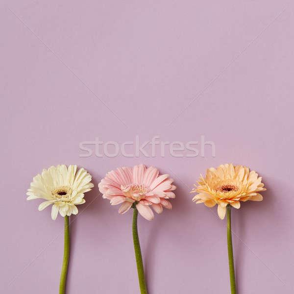 üç pembe kâğıt en az bahar kartpostal Stok fotoğraf © artjazz
