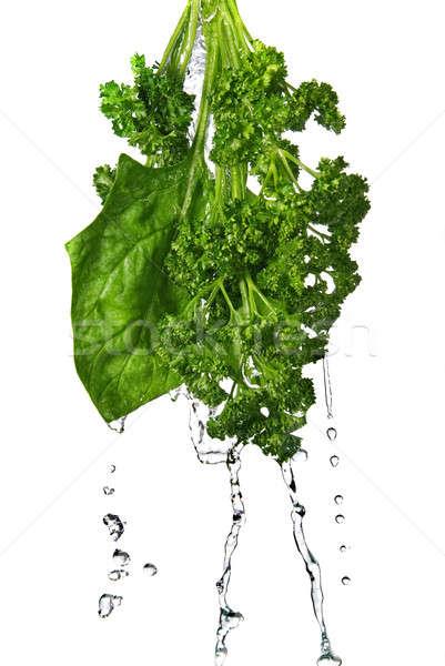 Kroplami wody zielone szpinak pietruszka odizolowany Zdjęcia stock © artjazz