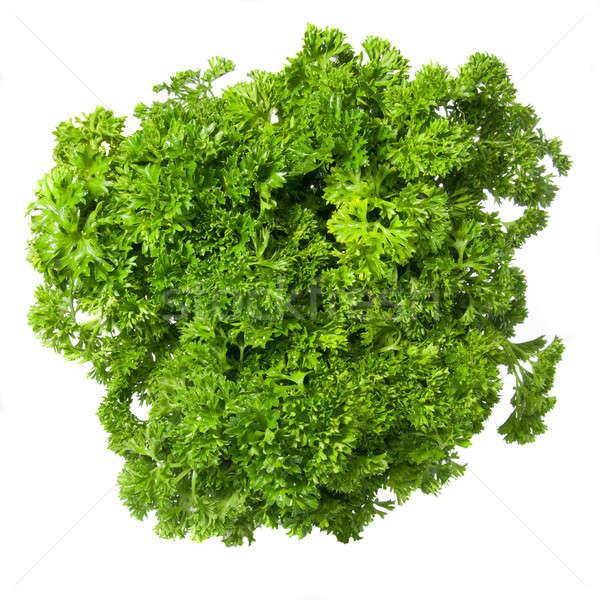 Bouquet of parsley isolated on white Stock photo © artjazz