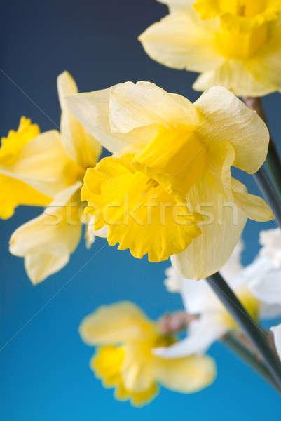 Sarı beyaz mavi Paskalya bahar yaprak Stok fotoğraf © artjazz