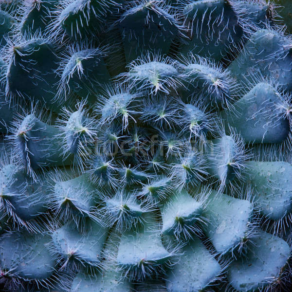 Succulent usine blanche fleur design Photo stock © artjazz