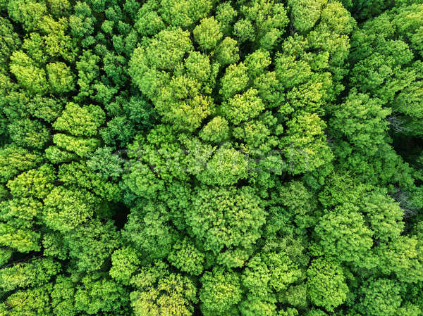 Aerial view beautiful deciduous forest. Photo from the drone Stock photo © artjazz