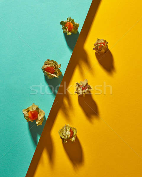 Flat lay view of the pattern of yellow physalis fruit with shadows on diagonally duotone yellow gree Stock photo © artjazz