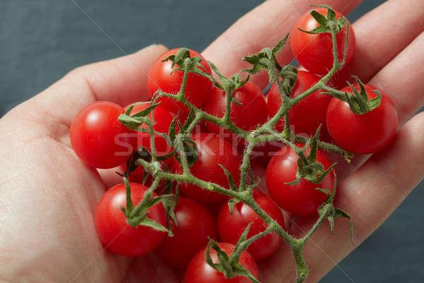 Bunch cherry tomatoes in hand Stock photo © artjazz