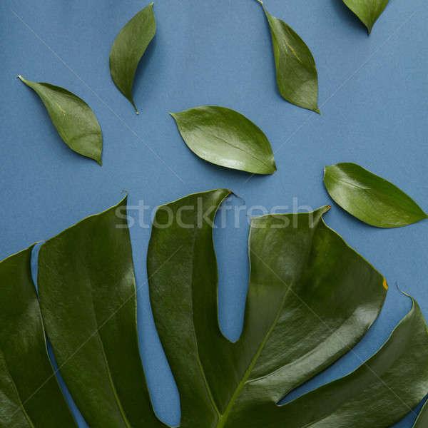 Yeşil yaprakları yalıtılmış doku üst görmek peynir Stok fotoğraf © artjazz
