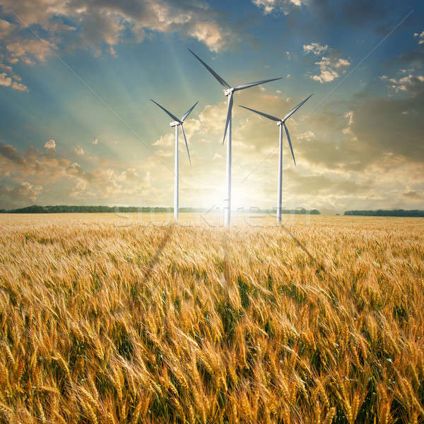 Wind generators turbines on wheat field Stock photo © artjazz